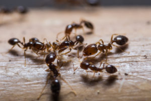 Ants in Salt Lake City