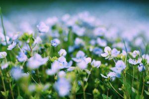 spring-pest-control