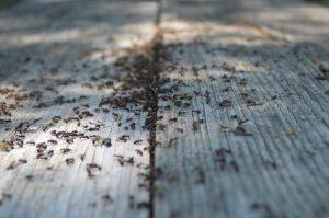 ant pile on floor